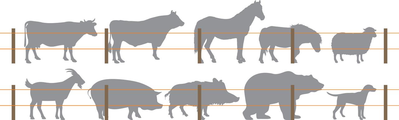 Indicații pentru construcția gardurilor electrice după specie de animale