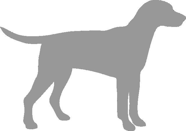 Câini și pisici