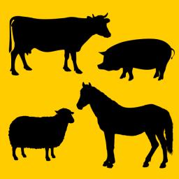 Pachete de bază pentru animale domestice